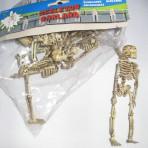 Slinger van skeletten